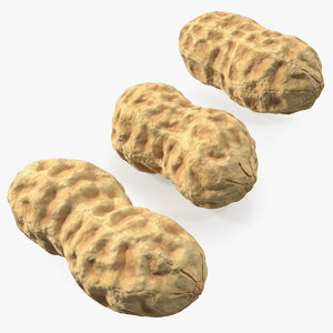 3D peanuts nut model