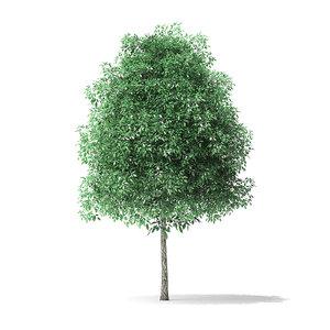 green ash tree 3 3D