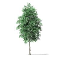 green ash tree 7 3D model