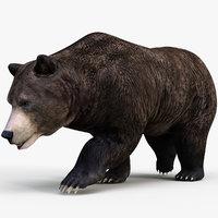 3D model realistic brown