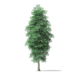 green ash tree 8 3D model