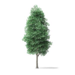 3D green ash tree 9m model