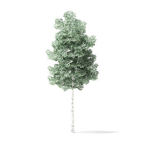 3D quaking aspen tree 3