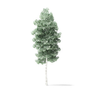 3D quaking aspen tree 4 model