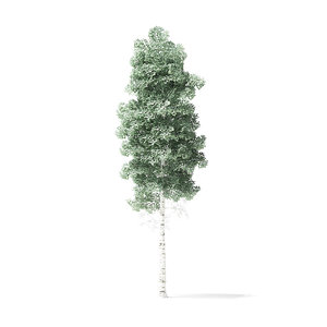 quaking aspen tree 5 3D model
