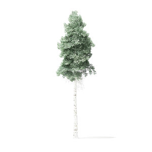 quaking aspen tree 8m 3D model