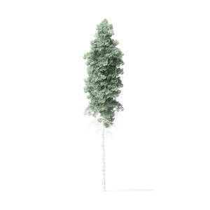 quaking aspen tree 10 3D