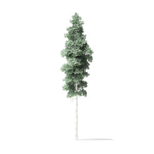 quaking aspen tree 12 3D