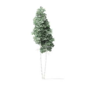 quaking aspen tree 9 3D