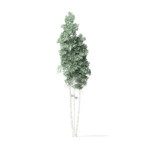 quaking aspen tree 11 3D model