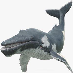 3D rigged humpback