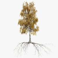 3D birch 5 tree