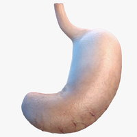 human stomach 3D model