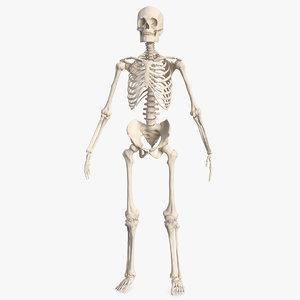 male skeleton body 3D