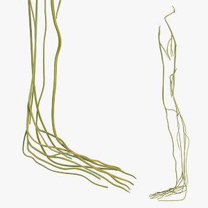 3D human leg nervous