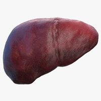 human liver 3D