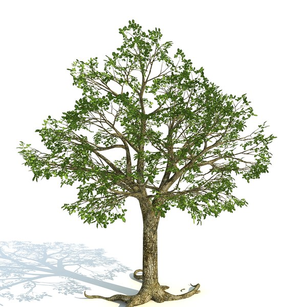 3D tree grow