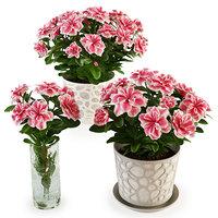 3D model azalea plant vase