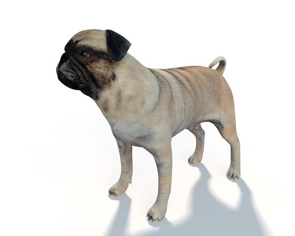 pug dog model