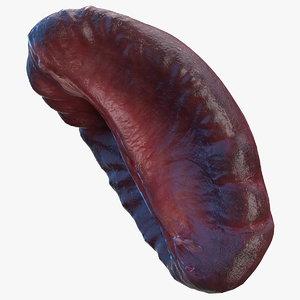 3D model human spleen