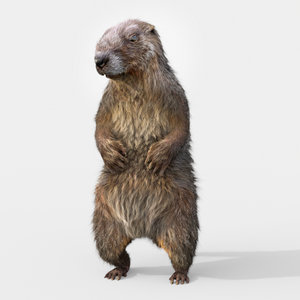 marmot rigged 3D
