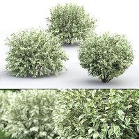 bush corona 3D model