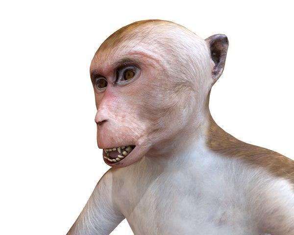 monkey macaque 3D