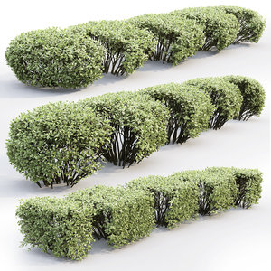 hedges bush model