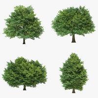 3D sessile oak tree
