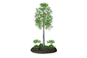 3D birch bushes