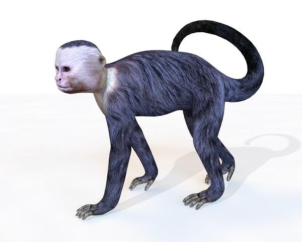 3D capuchin monkey model