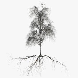 birch dry 1 tree 3D