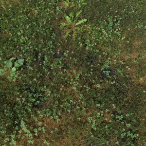 meadow patch grass 3D model