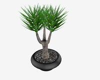 yucca pot 3D model