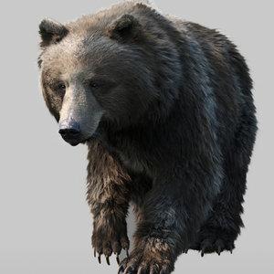 3D bear standard pack rig character model