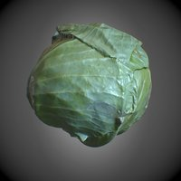 3D cabbage pbr