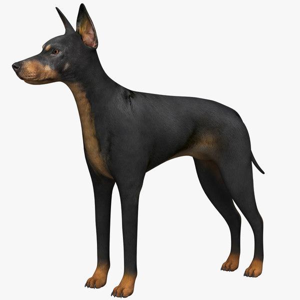 manchester terrier 3D model
