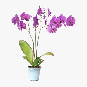 orchid flower 3D