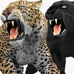 3D leopard panther pack fur model