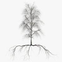 birch dry 2 tree 3D model