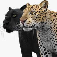 leopard panther pack fur 3D model