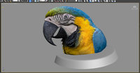 3D macaw colorful new