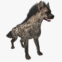 hyena animal 3D model