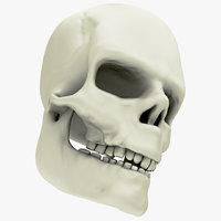3D skull science anatomy model