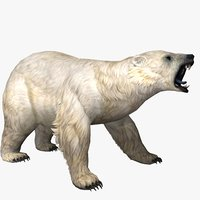 polar bear animal 3D model