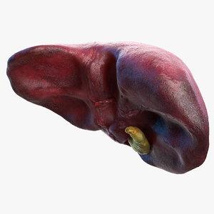 3D human liver gallbladder gall