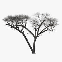 3D winter acacia tree model