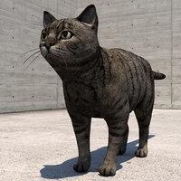 cats tabby animal 3D model