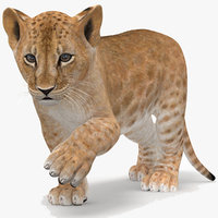 lion cub rigged modeled model