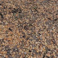 Ground autumn scan